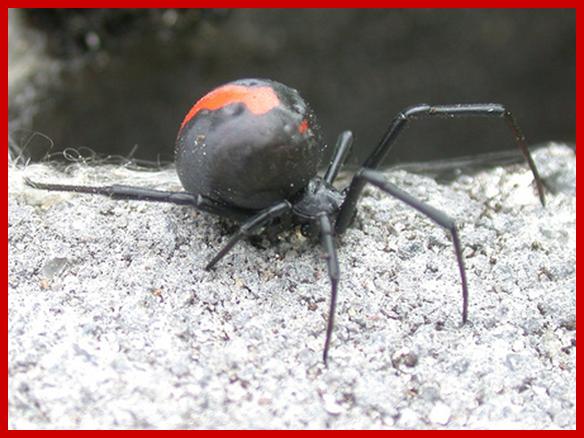 危険な外来生物|東京都環境局